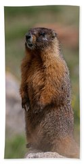 Hand Towel featuring the photograph Marmot by Gary Lengyel