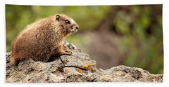 Marmot Hand Towel by Lana Trussell