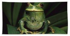 Marsupial Frog Gastrotheca Orophylax Hand Towel