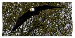 Mature Bald Eagle Bath Towel
