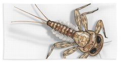Mayfly Larva Nymph Rithorgena Ecdyonurus Venosus - Moscas De May Hand Towel