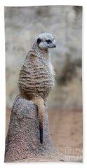 Meerkat Sitting And Looking Right Bath Towel