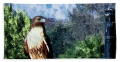 Hand Towel featuring the photograph Menifee Falcon by Rhonda Strickland