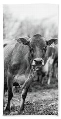 Milk Cow Stowe Vermont In Black And White Hand Towel