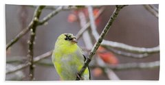 Bath Towel featuring the photograph Molting Gold Finch Square by Bill Wakeley