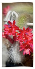 Monkey's Tail Cactus Flower Hand Towel
