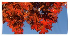 More Than Fifty Shades Of Red - Glossy Leathery Oak Leaves In The Sunshine - Downward Bath Towel