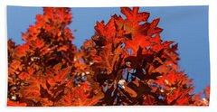More Than Fifty Shades Of Red - Glossy Leathery Oak Leaves In The Sunshine - Upward Bath Towel