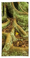 Hand Towel featuring the photograph Moreton Bay Fig by Werner Padarin