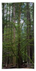 Moss Covered Tree Hand Towel