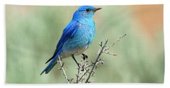 Mountain Bluebird Beauty Hand Towel by Mike Dawson
