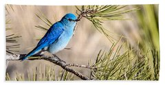 Mountain Bluebird In A Pine Hand Towel