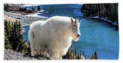 Mountain Goat At Lower Blue Lake Hand Towel