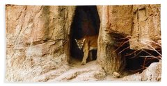 Mountain Lion In The Desert Hand Towel