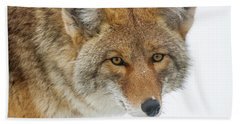 Mr. Coyote Bath Towel