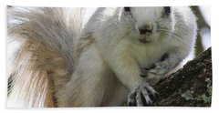 Mr. Inquisitive II Hand Towel by Betsy Knapp