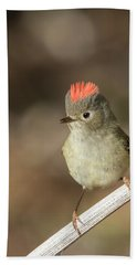 Bath Towel featuring the photograph Mr Kinglet  by Mircea Costina Photography