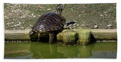 Bath Towel featuring the photograph Mr. Turtle by Melissa Messick