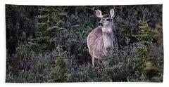 Mule Deer Doe Bath Towel