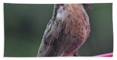 Multicolored Male Anna's Hummingbird Bath Towel