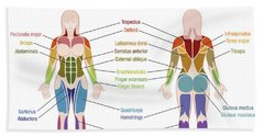 Muscle Diagram Female Body Names Hand Towel