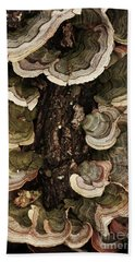 Hand Towel featuring the photograph Mushroom Shells By The Lake Shore by Kim Henderson