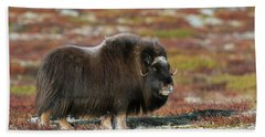 Muskox Bath Towel