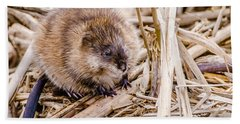 Hand Towel featuring the photograph Muskrat Ball by Steven Santamour