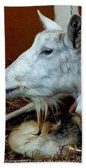 My Dairy Goat Sugar Bath Towel