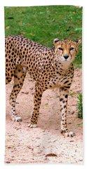 North African Cheetah Hand Towel