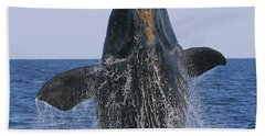 North Atlantic Right Whale Breaching Bath Towel