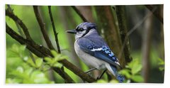 Northern Blue Jay Bath Towel