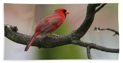 Northern Cardinal Bath Towel by Living Color Photography Lorraine Lynch