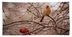 Hand Towel featuring the photograph Northern Cardinal Pair In Spring by Terry DeLuco