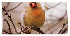 Bath Towel featuring the photograph Northern Female Cardinal Pose by Terry DeLuco