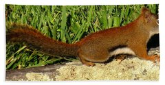 Red Squirrel Hand Towel