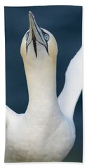 Northern Gannet Stretching Its Wings Bath Towel