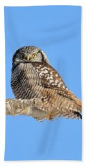 Northern Hawk-owl On Limb Bath Towel by Debbie Stahre