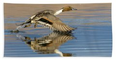 Northern Pintail With Reflection Bath Towel