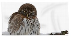 Northern Pygmy Owl 2 Hand Towel