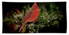 Northern Scarlet Cardinal On White Berries Bath Towel by Janette Boyd