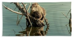 Hand Towel featuring the photograph Nutria On Stick-up by Robert Frederick