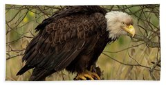 Old Eagle Bath Towel by Sheldon Bilsker