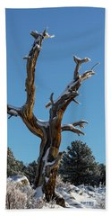 Old Tree - 9167 Hand Towel