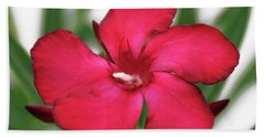 Bath Towel featuring the photograph Oleander Blood-red Velvet 1 by Wilhelm Hufnagl
