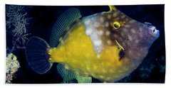 Hand Towel featuring the photograph Orange Filefish by Jean Noren