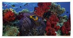 Orange-finned Clownfish And Soft Corals Hand Towel