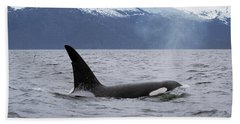Orca Orcinus Orca Surfacing Hand Towel by Konrad Wothe