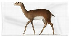 Bath Towel featuring the drawing Oribi, A Small African Antelope by J D L Franz Wagner