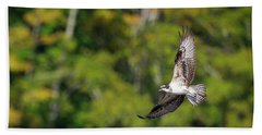 Osprey Hand Towel by Bill Wakeley